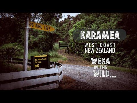 Big Rimu Tree Walk - Karamea, New Zealand