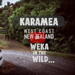 Big Rimu Tree Walk - Karamea, West Coast, New Zealand [Video]