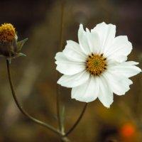 The Zen of Flower Watching [Video]