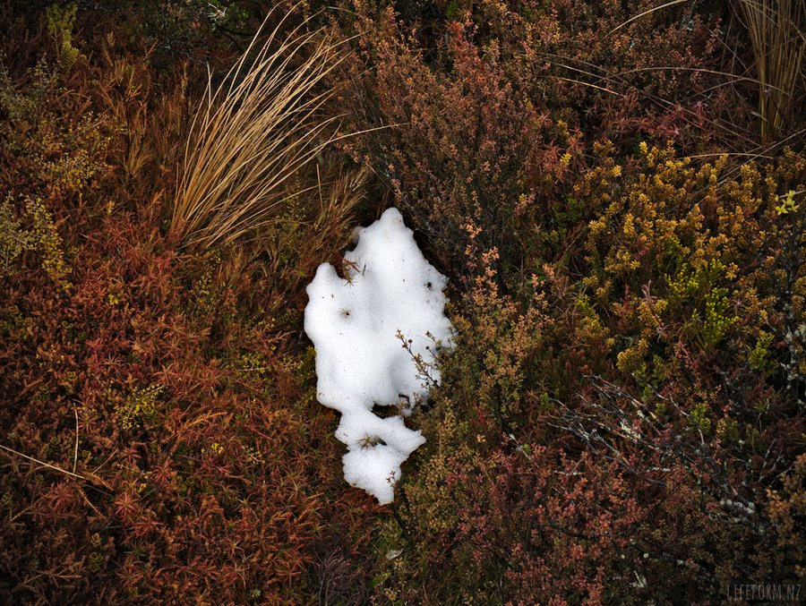 Patch of snow on sub-alpine shrubs