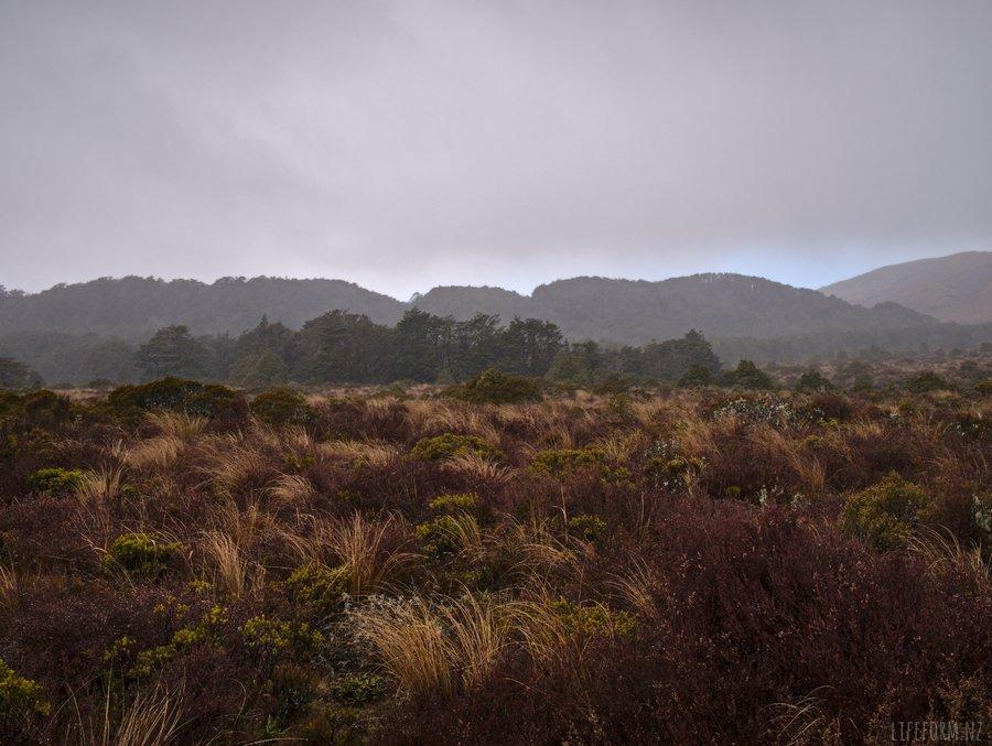 Sub-alpine landscape near Taranaki Falls, Ruapehu