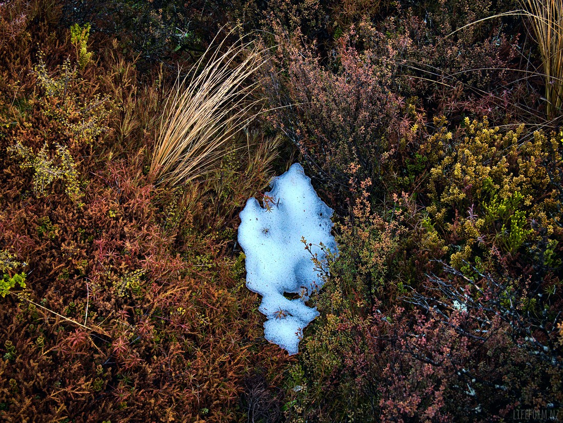 Snow and shrubs - Taranaki Falls