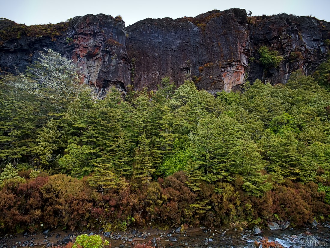 trees against cliffs near Taranaki Falls