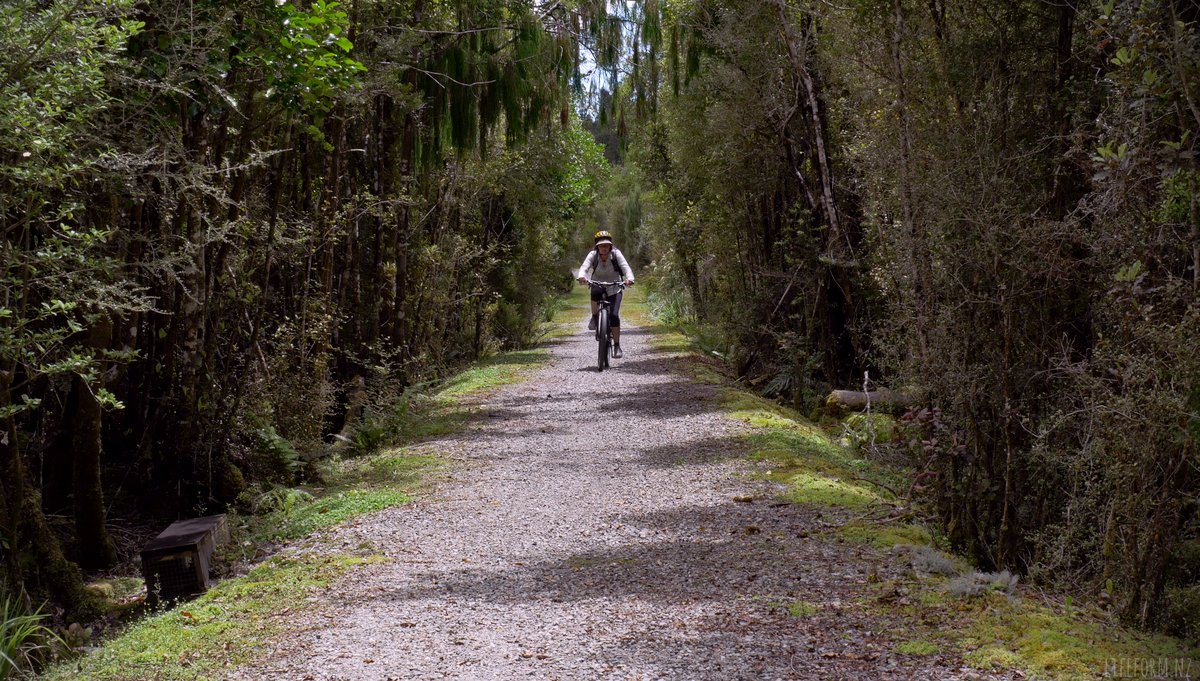 Biker on the West Coast Wilderness Trail